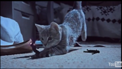 collegehumor:  Video: Kittens Chase Tiny Humans Internet Cat Videos just got a WHOLE LOTMORE… whatever's happening here? Who cares, it's great.  Yeah this does it for me