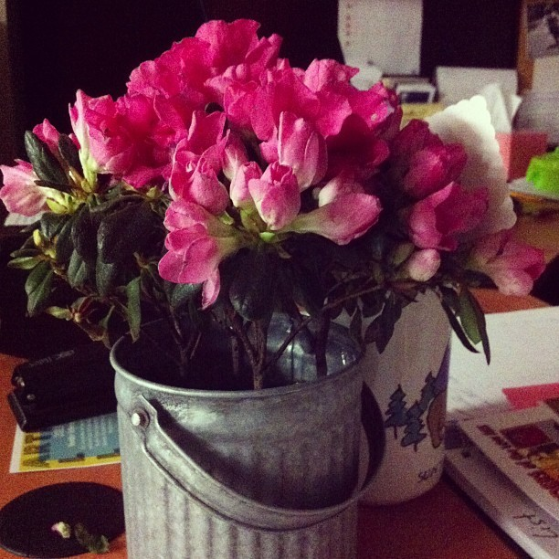 Cute little flowers at my bosses desk!