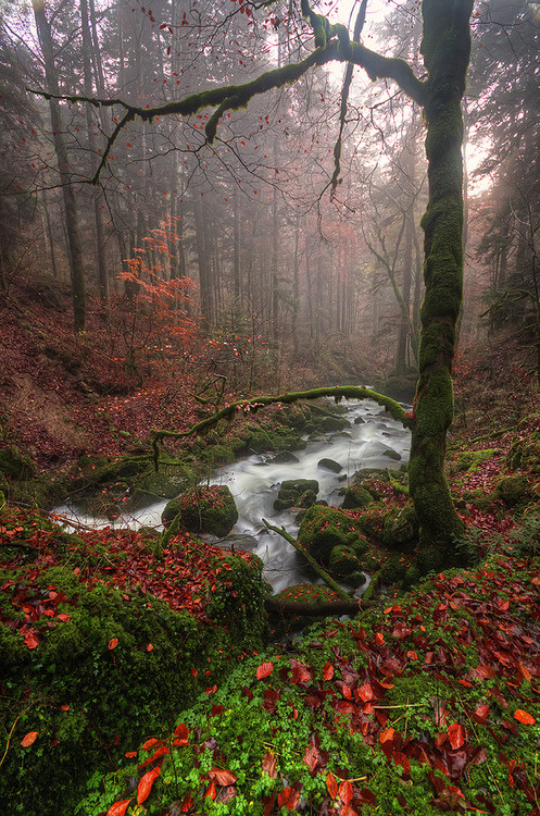 Forest Stream, France photo via isntshe