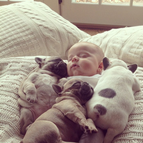 7 Photos of a BABY COVERED IN PUPPIES! We repeat: A BABY COVERED IN PUPPIES!