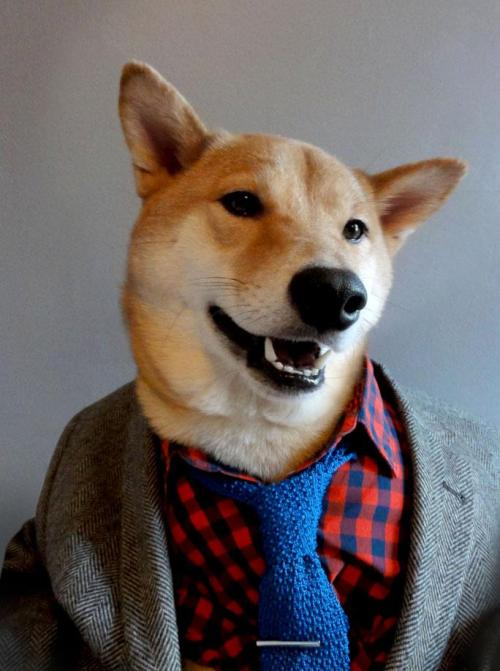 Perritzo.  inubunny:  pincussion:  curiousz:  Menswear Dog is a 3 year old shiba inu living in NYC with a panache for all things style.  This dog has better style than me.  Perro estiloso
