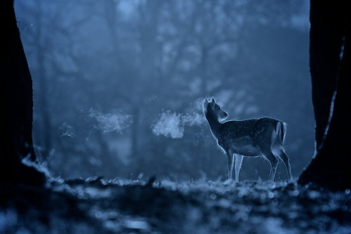 "magicalnaturetour:  ""Night breath"" by Mark Bridger"