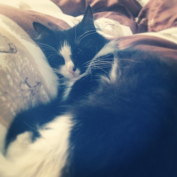 Enjoying his good-morning snuggle time. #kitties