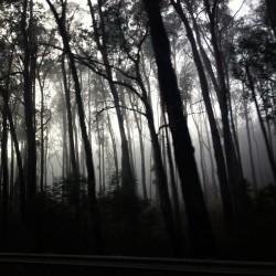 #foggy #trees #roadtrip #mtbuller
