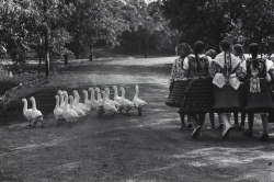varietas:  Hungary 1964 Photo: Elliott Erwitt