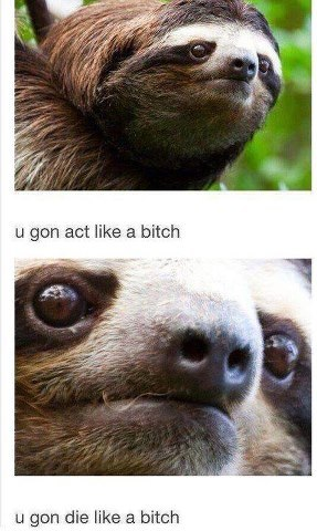 if you don't like any and all things sloth, we can't be friends. follow this blog!