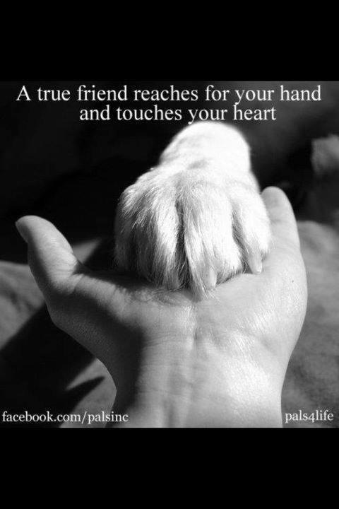 wondersofanimals:  This is so true.  Absolutely…