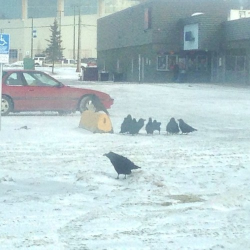 ".@streetcrow, your buddies up here in #YXJ are having serious parties (or should I say, ""conspiracies""), every day at the mall. #TotemMall (1/2)"