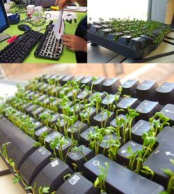 bellsproutt:  How to take care of them? Click here.  A white keyboard looks better.