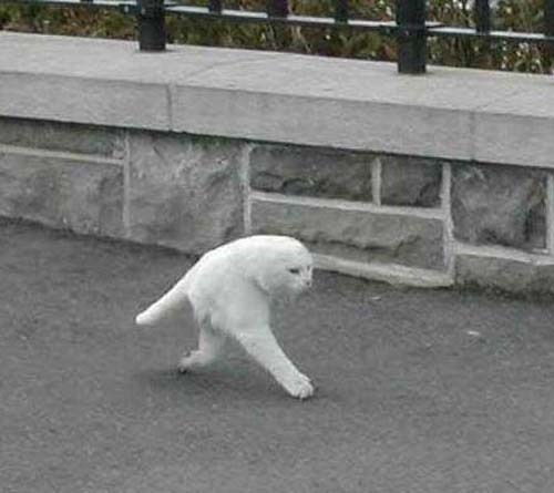 overhumor:  cat in google street view