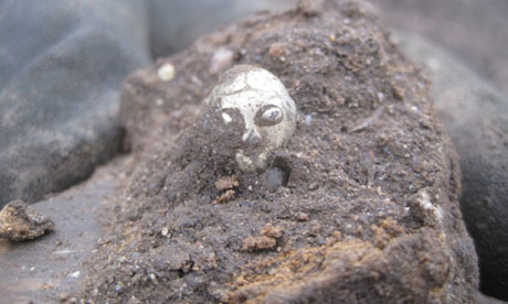 "archaeologistsdontdigdinosaurs:  A little face peering up from a clod of frozen mud in Denmark has proved to be a unique find: the only known 3D Viking representation of a valkyrie. The figurine, believed to date from about AD800, was found in December and has gone straight from conservation to display in the National Museum in Copenhagen. It will then be included in the exhibition on the Viking age that opens there in June and at the British Museum in 2014. The legends of the valkyries – the ominous companions of the god Odin who descend on battlefields to choose which warriors will die – have been among the most enduring in Scandinavian folklore and literature. Later images, often inspired by Wagner's music, tend to be romantic creatures with flowing locks and voluptuous bodies. The thumb-sized figurine is made of gilded silver, with some black niello inlay decoration. The valkyrie is sturdily dressed, armed with a double-sided Viking sword and a round shield, her hair neatly twisted into a long ponytail forming a loop, suggesting it may have been worn as a pendant.  Four views of the valkyrie, the only 3D depiction from the Viking era known to exist Photograph: Asger Kjærgaard/Odense Bys Museer Small, flat images of striding women, believed to represent valkyrie, have been found on many Danish Viking sites, but nothing like this figurine. Its survival is something of a miracle: the lower legs and feet are missing, and it was found among fragments of scrap metal, so somebody may have started to chop it up to be melted down to extract its silver content. Mogens Bo Henriksen, an archaeologist and curator at the Odense city museum, on Funen island near the find site, described the figurine as ""unique"" and said: ""There can hardly be any doubt that the figure depicts one of Odin's valkyries as we know them from the sagas as well as from Swedish picture stones from the time around AD700,"" he said. The figurine was found at the end of December by Morten Skovsby, who was learning how to use a metal detector with three amateur archaeologists near the village of Hårby. Henriksen hopes that after the figurine's travels – during which it will be displayed near the largest Viking ship ever found – it will return to be exhibited in Odense."