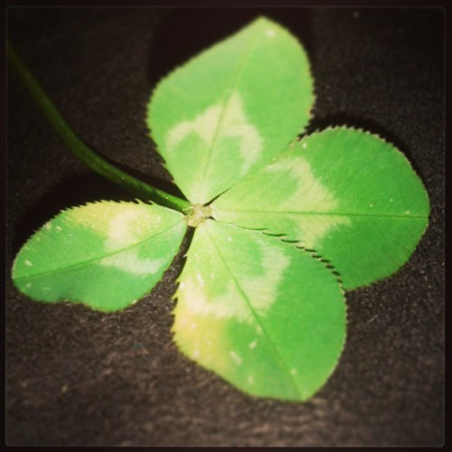 #clover #lucky #four