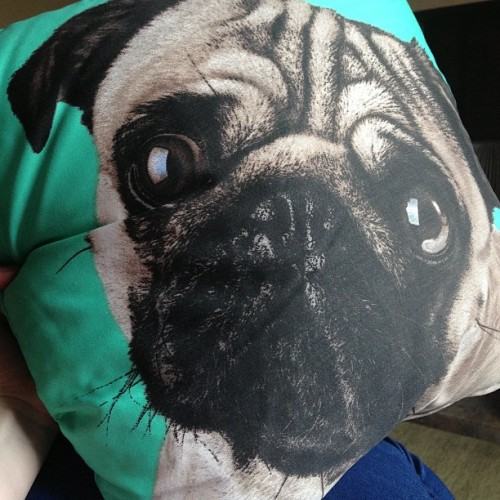 I think I'm obsessed #dog #pug #cushion #pillow #freak #ugly #green #obsession #weird #cool #sleep #tired #bed