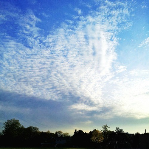 You needn't do anything. Relax. Be. Just be. That's fine enough. #sky #cloud #blue #instamood #tree #shadow #sunset