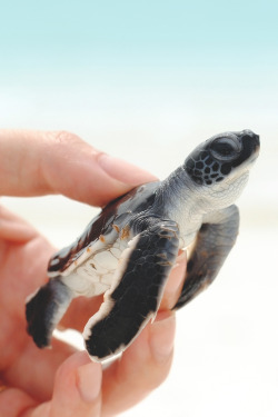 animals UP ocean WATSF