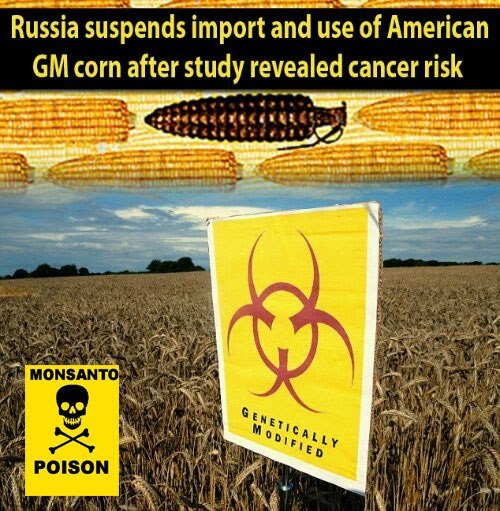 toomuchcelebrity:  questionall:  http://rt.com/news/monsanto-rats-tumor-france-531/  And this story will never make it to American TV