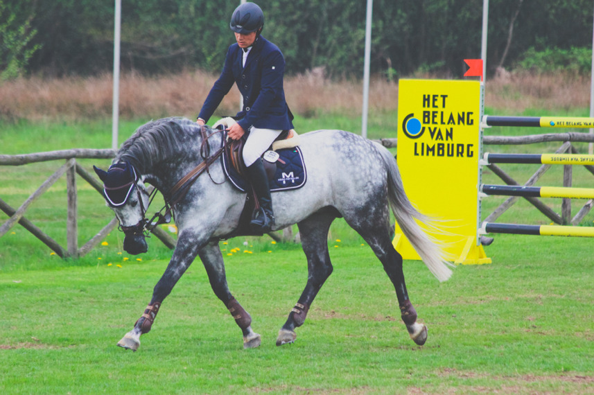 beyondequitation:  greys-and-bays:   Jumping Lummen '13 Fine then, be sexy. Can I please have this horse *makes inhuman noise*   Also, after you give me the horse, the rider ain't too bad lookin either.