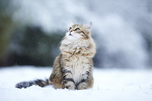 i wish my cat would sit in the snow.