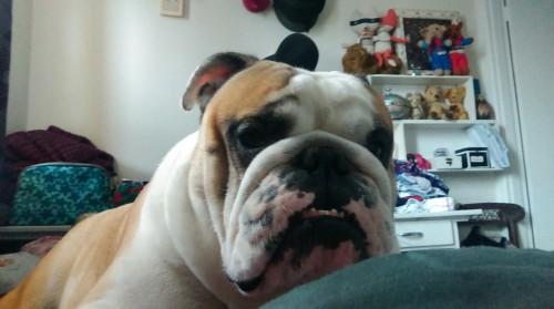 Woke up to this furry lump lying on me