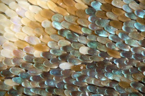 Close-up of a butterfly wing by Linden Gledhill