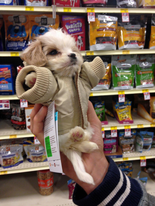 He'll grow into it. (photo via goliathkat)