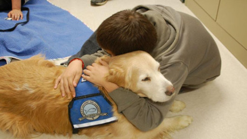 Therapy dogs travel to Boston to offer comfort 5 of the specially trained golden retrievers from the K-9 Parish Comfort Dog program will offer support in the wake of the marathon bombings.