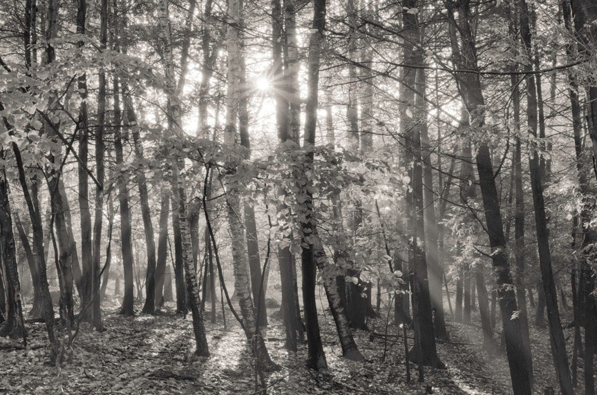 autumn sunshine, 8x10 fine art black & white photograph, nature by KSinclairPhotography (25.00 USD) nature, plant, art, black and white, photograph, leaves, earth, sunshine, light, forest, woods, fall, autumn