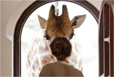 choccoto:  Wall Me Do | 52hearts: Tamimi Giraffe Manor in Nairobi,…