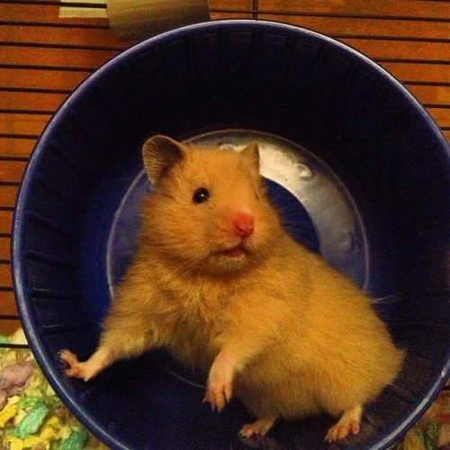 PHOTO OP: The Wheel Via @skyenimals.