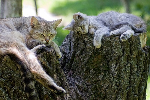 "raccaryusui:  magicalnaturetour:  Alinny Tom - ""Small Family"" ~ Sweet Dreams beautiful friends ♥  ねぇーママ、こんなところで寝るの止めない?"