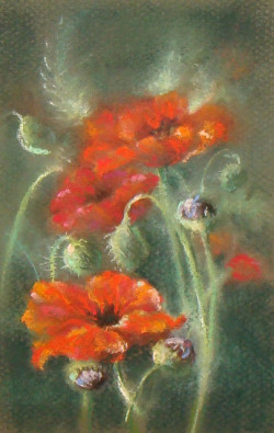 coffeepeople:  Poppies by gossamerpromise on Flickr.