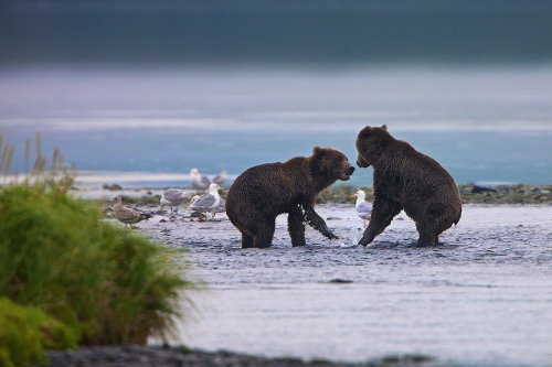 llbwwb:  Dispute by Buck Shreck.