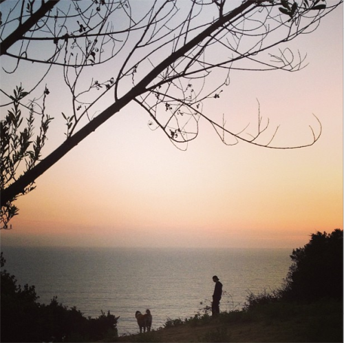 specialagent18:  @ericcolsen:  From our sunset walk last night. Kota was telling me he's very nervous about@danielaruah new love interest on #ncisla #mydogships