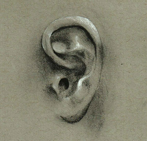 Inspired by James Gurney's lovely drawing of an ear.