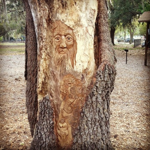 Tree Art (at Fleet Peeples Dog Park)