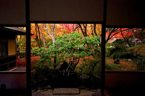 autumn garden by tez-guitar on Flickr.