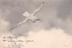 billowy:  1902 postcard