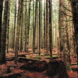A lot of forest in Oregon is like this. Seemingly devoid of animal life, with all the trees the same size. These were all planted after the original trees were chopped down. It's beautiful for sure, but beautiful like a memorial, not a forest. by gabege http://instagr.am/p/R5jfaysHQ7/