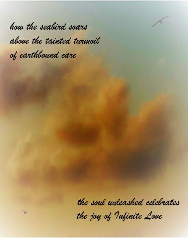 how the seabird soars above the tainted turmoil of earthbound care the soul unleashed celebrates the joy of Infinite Love copyright 2020 #birds_nature #the untethered soul #faith#love