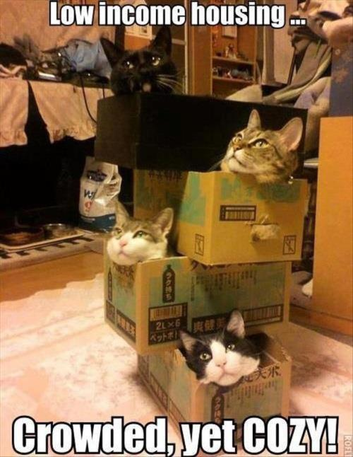 Cats and Their BoxesLow-cost housing. Low-cost pets?