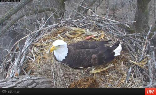 Wonderful live streaming solar powered Eagle Cam. Click through to see momma watch over her two eggs. Spring is here…