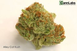 weedporndaily:  Alley Cat Kush