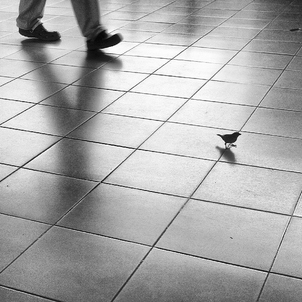 A fearless Sparrow. #bird #sparrow #fearless #urban #miniature #igphoto #tagsforlike #luct #limkokwing #cyberjaya #malaysia #putrajaya #instadaily #instashot #instacity #city #photography #photo #picture #shot #photooftheday #walking