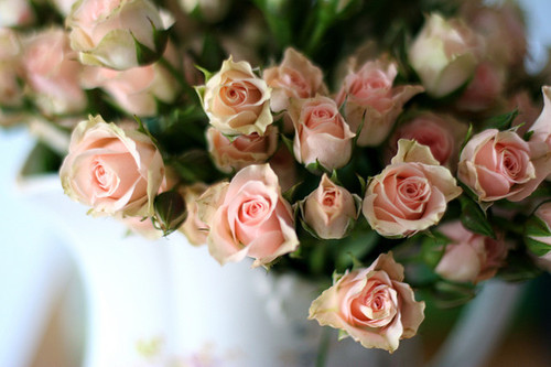 roses peach rose peach roses peach rose flowers flower peach flower peach flowers bouquet bouquet of flowers bouquet of roses