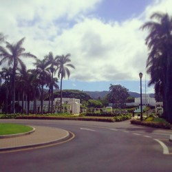 today is just so beautiful! I love it! #laietemple #laie #thereisbeautyallaround #perksofbeinganislandgirl #summertime #luckyilivehawaii #808allday #blessed