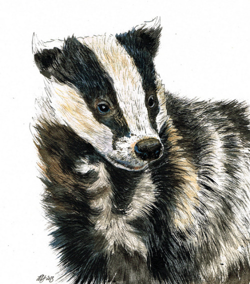 Badger Portrait on Flickr.Needs a name…