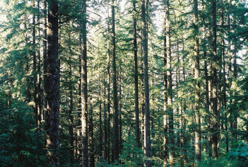 mensae:  OSU forest by M A T T sanchez on Flickr.
