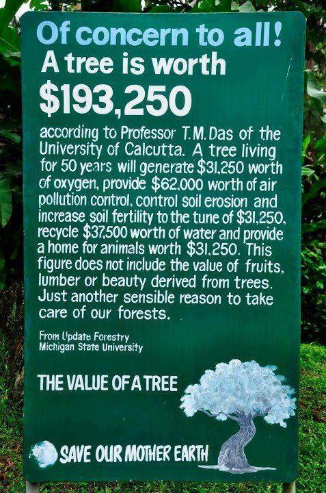flowerstreesandhoneybees:  There you go economists! Leave our trees alone!