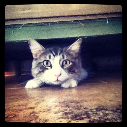 I hid under your couch because I love you! @taylorkratz77 #cat #dork #purr #creeping #weirdwednesday