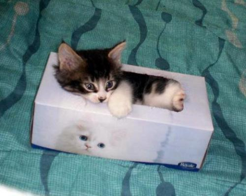 In a tissue box. With a cat on it,